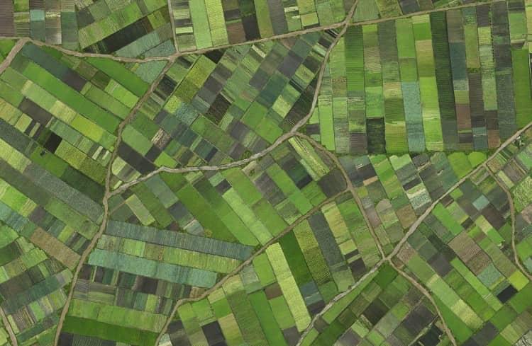 Verde, detail